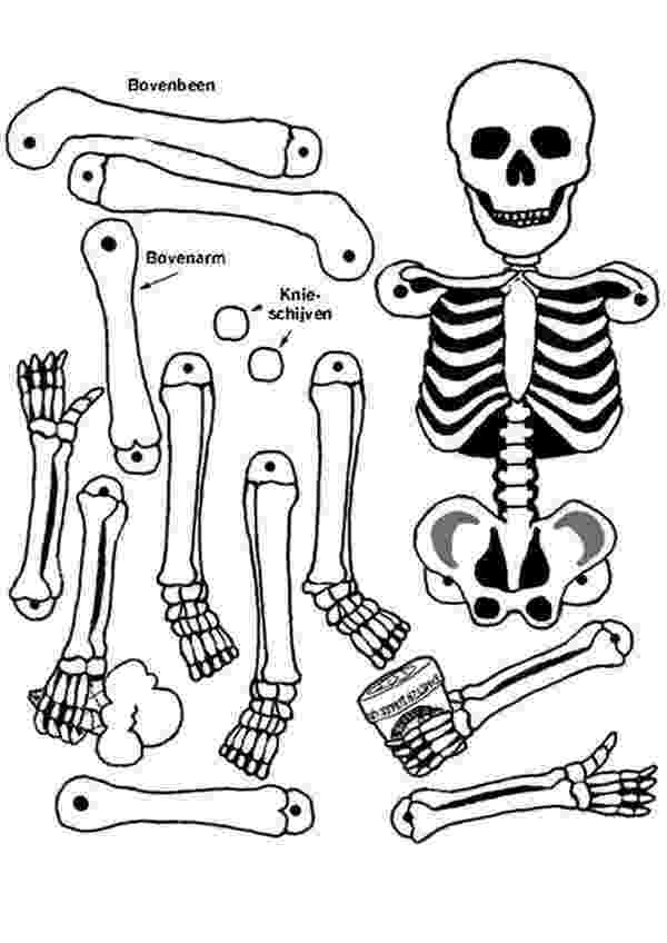 human skeleton coloring page anatomical heart coloring page coloring home page human skeleton coloring