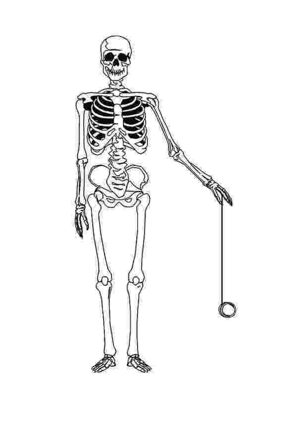 human skeleton coloring page growing memories and minds may 2010 human page skeleton coloring