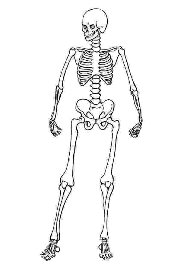human skeleton coloring page human skeleton pages coloring pages human skeleton page coloring