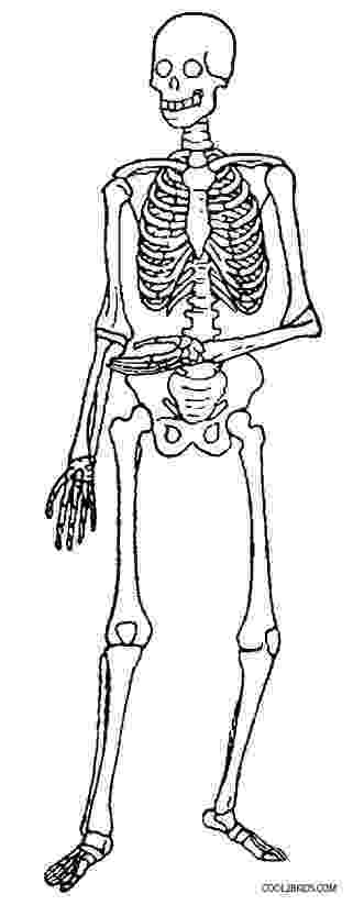 human skeleton coloring page skeleton drawing for kids at getdrawingscom free for skeleton coloring human page