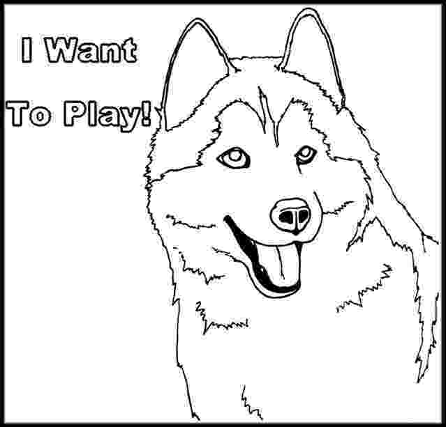 husky pictures to colour husky coloring pages free printable coloring pages for kids husky to pictures colour