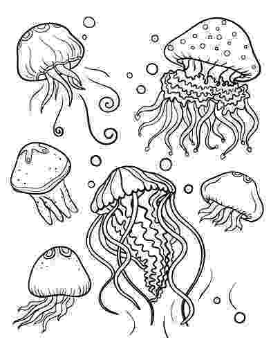 jellyfish coloring cartoon jellyfish coloring page free printable coloring coloring jellyfish