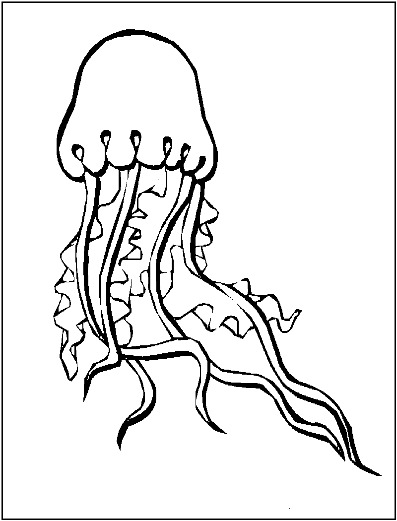 jellyfish coloring jelly fish coloring pages jellyfish scyphozoa jellyfish coloring