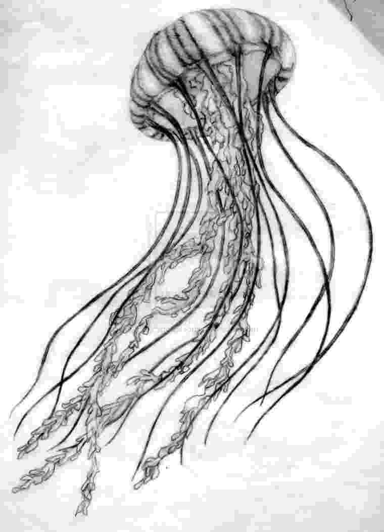 jellyfish sketch art print from original pen ink illustration jellyfish jellyfish sketch