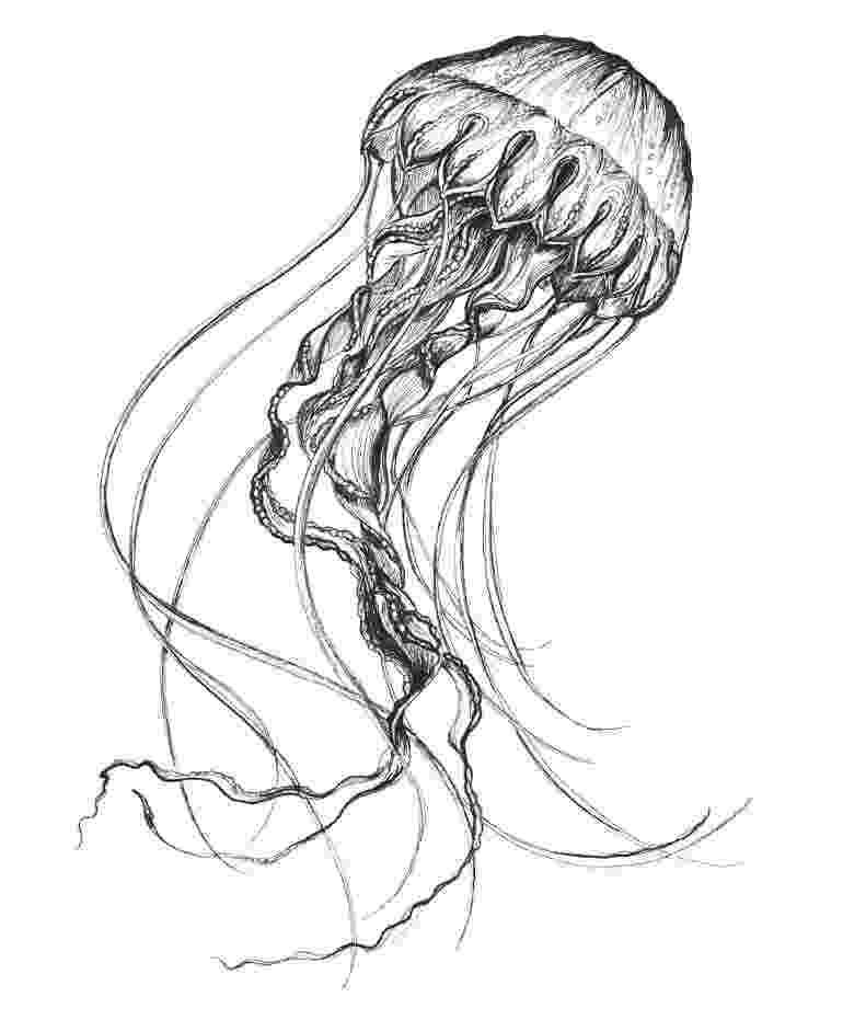 jellyfish sketch brilliant jellyfish sketch by annacolt on deviantart jellyfish sketch