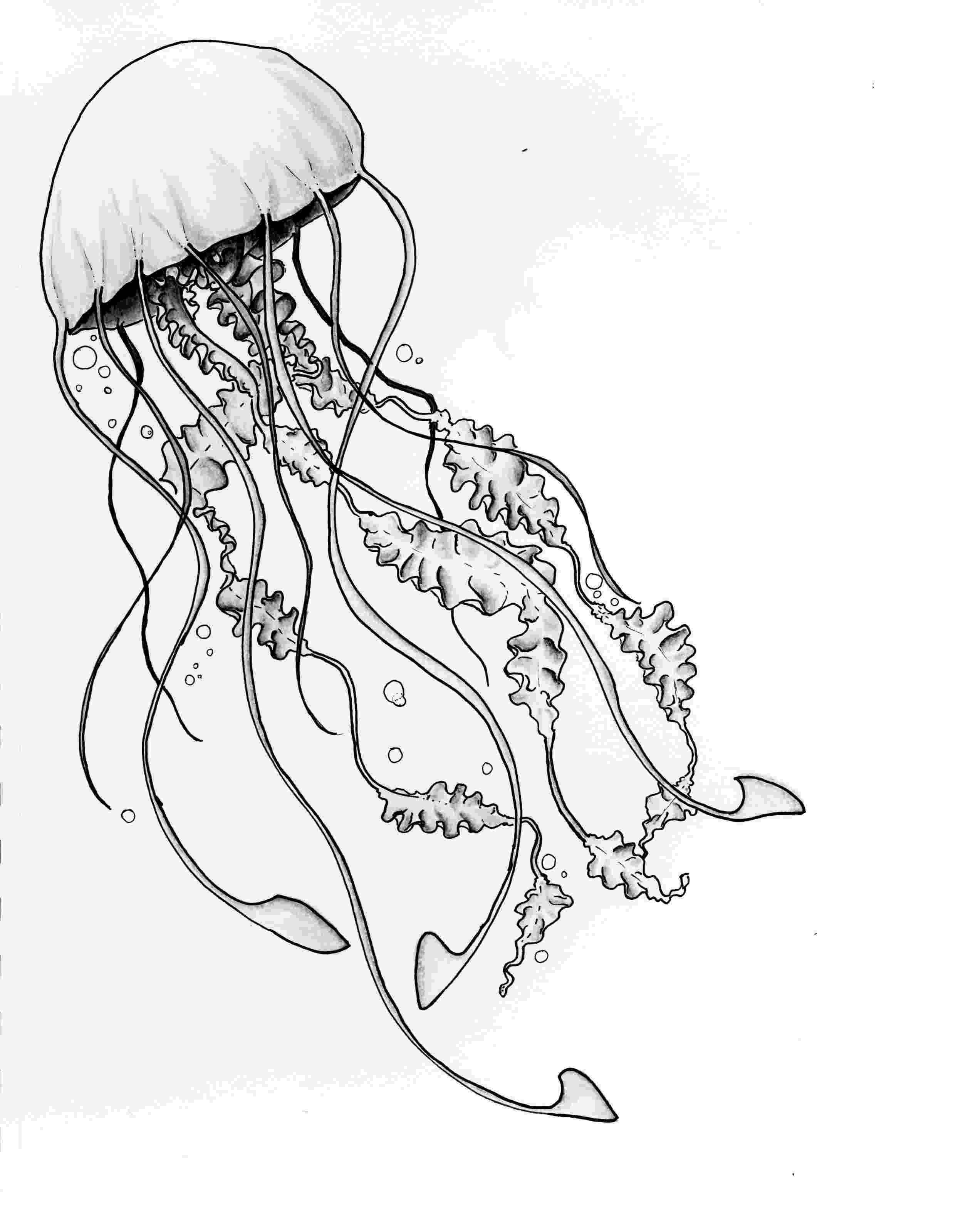 jellyfish sketch how to draw a jellyfish really easy drawing tutorial jellyfish sketch