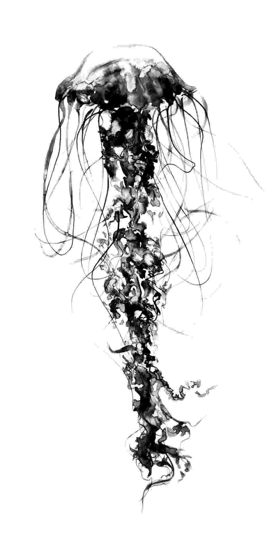 jellyfish sketch how to draw jellyfish step by step arcmelcom jellyfish sketch