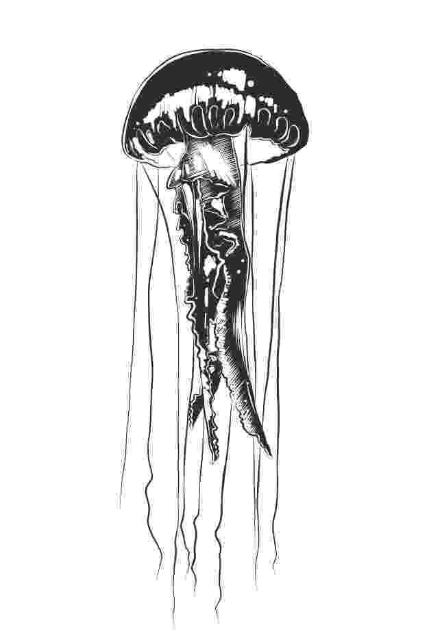 jellyfish sketch illustration watercolourarts jellyfish sketch