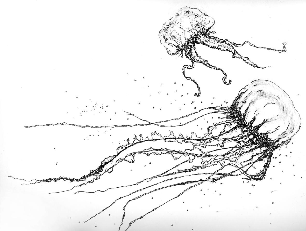 jellyfish sketch inkblot jellyfish by chimeradreams on deviantart jellyfish sketch