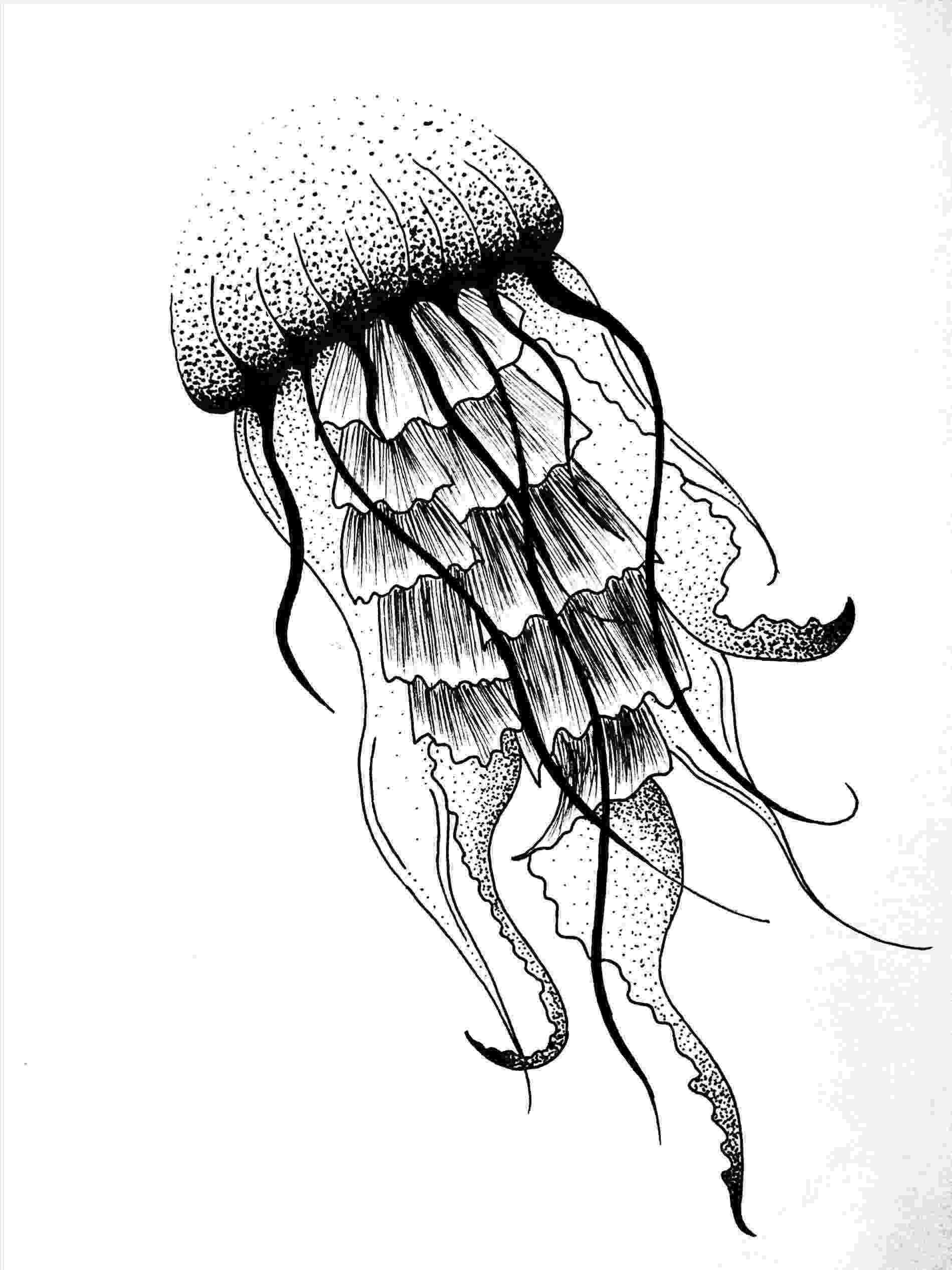 jellyfish sketch jellyfish by candykilljoy on deviantart tattoo ideas sketch jellyfish