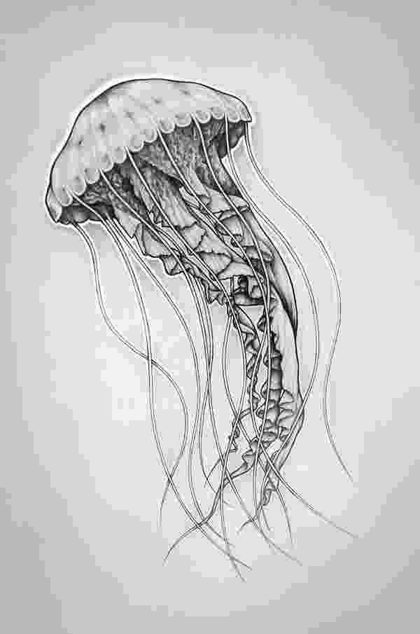 jellyfish sketch jellyfish drawing clipart best jellyfish sketch