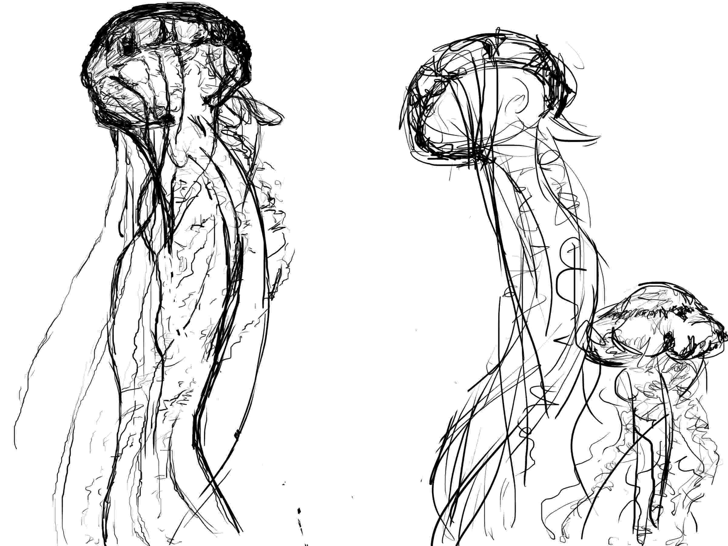jellyfish sketch jellyfish drawing jellyfish art jellyfish tattoo jellyfish sketch