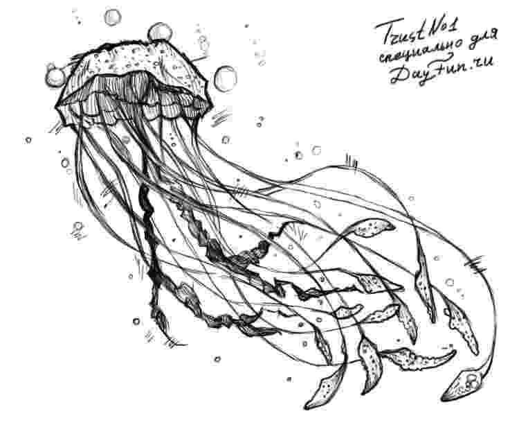 jellyfish sketch jellyfish sketch at paintingvalleycom explore jellyfish sketch 1 1