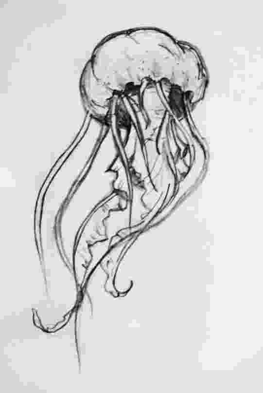 jellyfish sketch jellyfish sketch sketch jellyfish