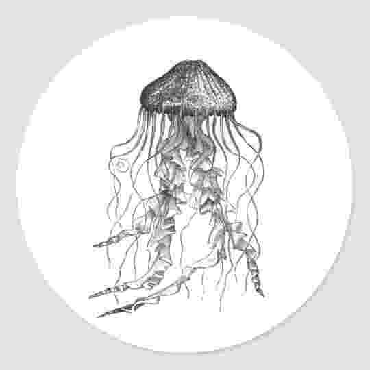 jellyfish sketch may 2006 albino kraken sketch jellyfish