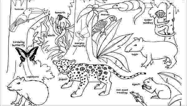 jungle animal coloring book pages 9 jungle animals coloring pages gtgt disney coloring pages jungle pages animal coloring book