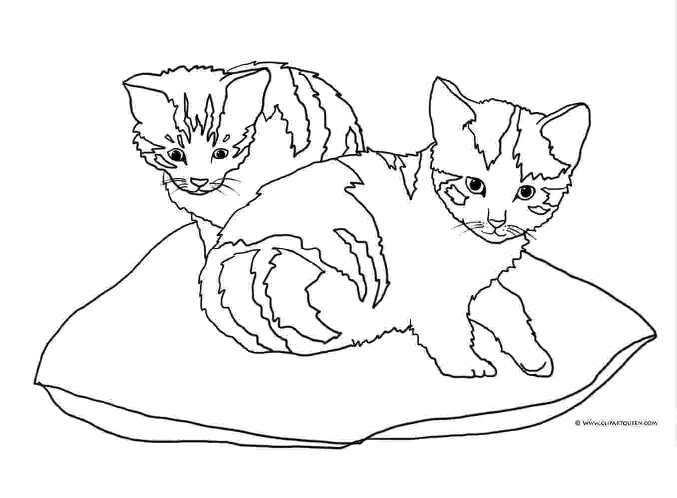 kitten color pages cat color pages printable cat coloring sheets animal kitten pages color