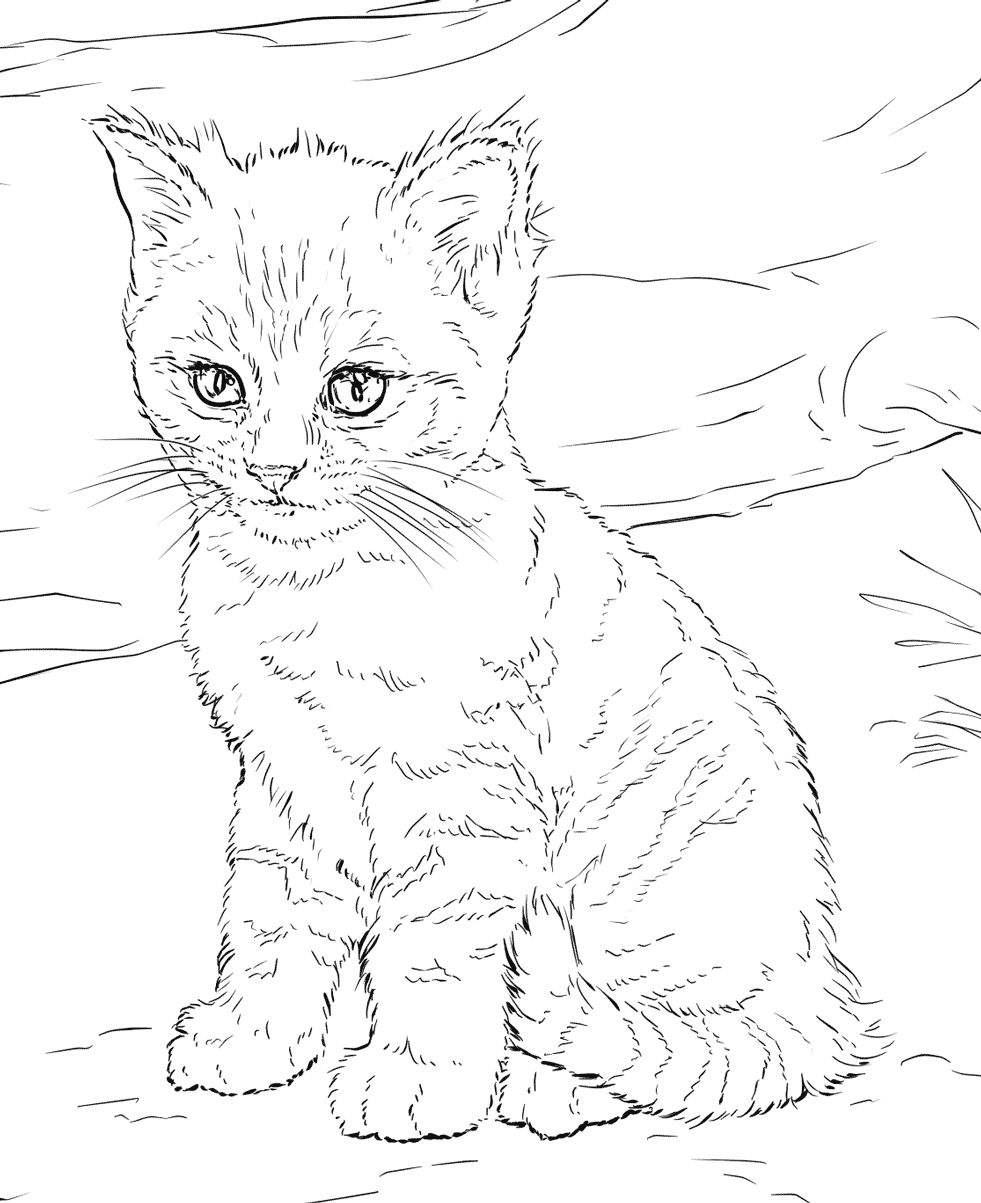 kitten color pages coloring pages cats and kittens coloring pages free and pages kitten color