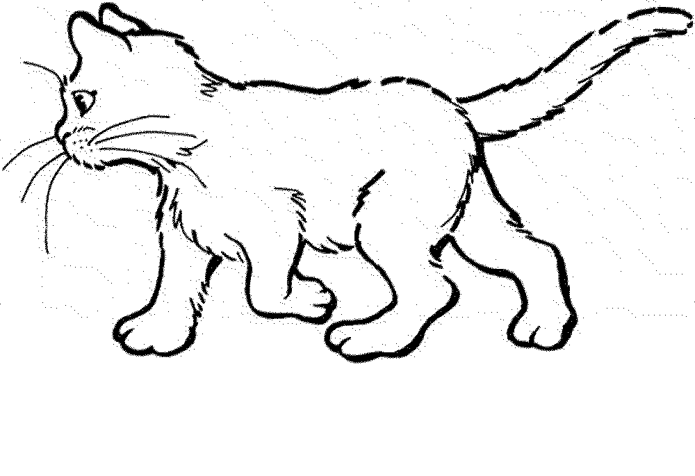 kitty cat pictures to color kitten and puppy coloring pages to print coloring home kitty to color pictures cat