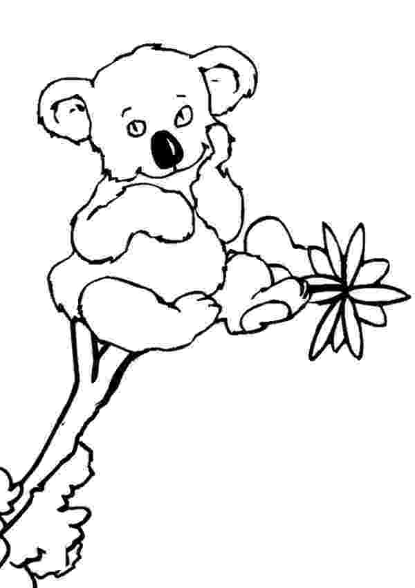 koala coloring pages koala coloring pages to download and print for free pages coloring koala