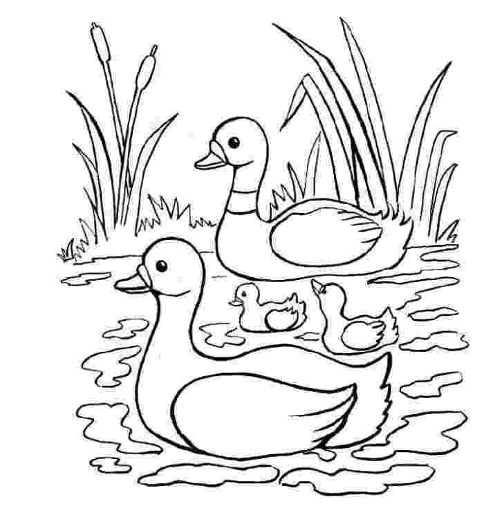 laguna para colorear dibujo pato tiernos para colorear imagui laguna para colorear