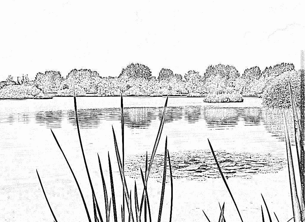 laguna para colorear dibujos para colorear y pintar los lirios de agua en un laguna colorear para