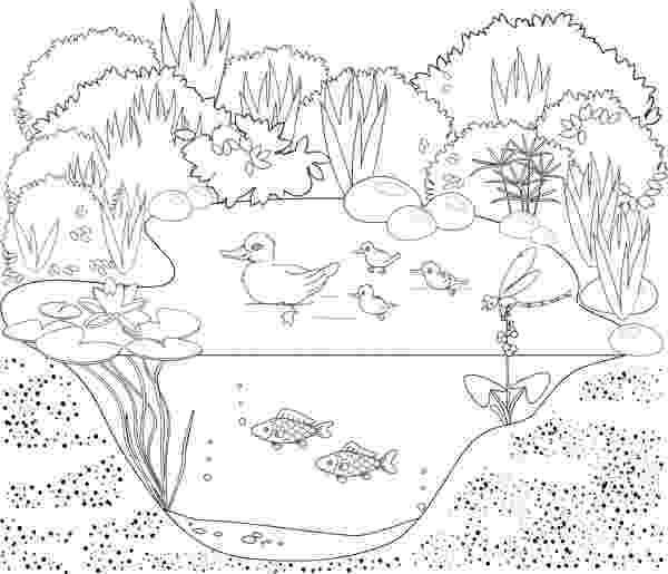 laguna para colorear ecosistema de la charca del pato archivo imágenes colorear para laguna