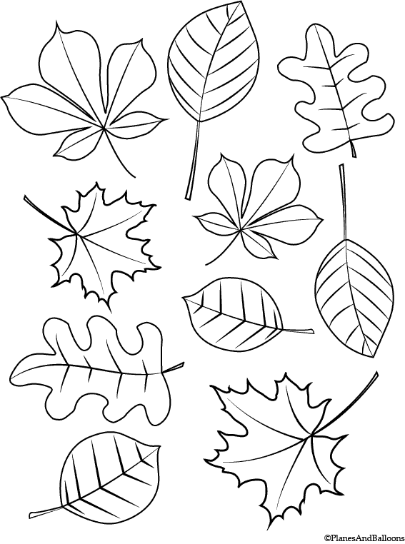leaves coloring page fall coloring pages for young children free instant download coloring leaves page