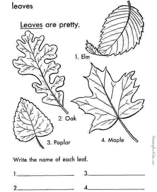 leaves coloring page fall leaves coloring pages best coloring pages for kids page leaves coloring