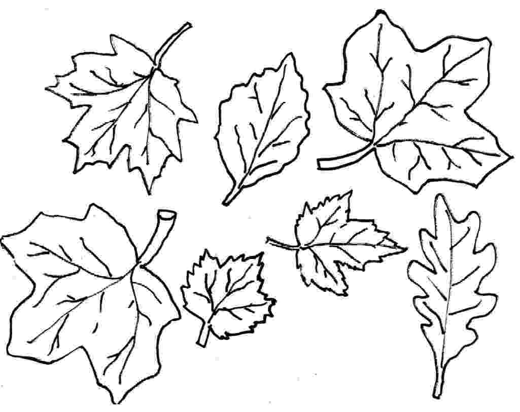 leaves coloring page fall leaves coloring pages getcoloringpagescom coloring leaves page