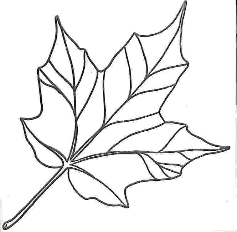 leaves coloring page kids n funcom 39 coloring pages of leaves leaves page coloring