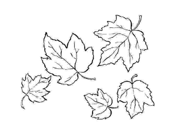 leaves coloring page leaf printable coloring pages coloring page leaves