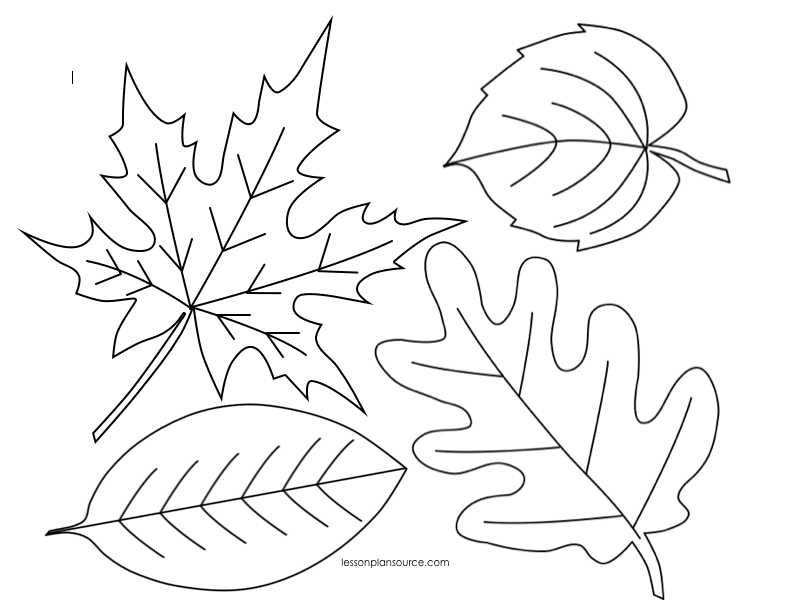leaves coloring page we39re going on a leaf hunt follow up activities leaves coloring page