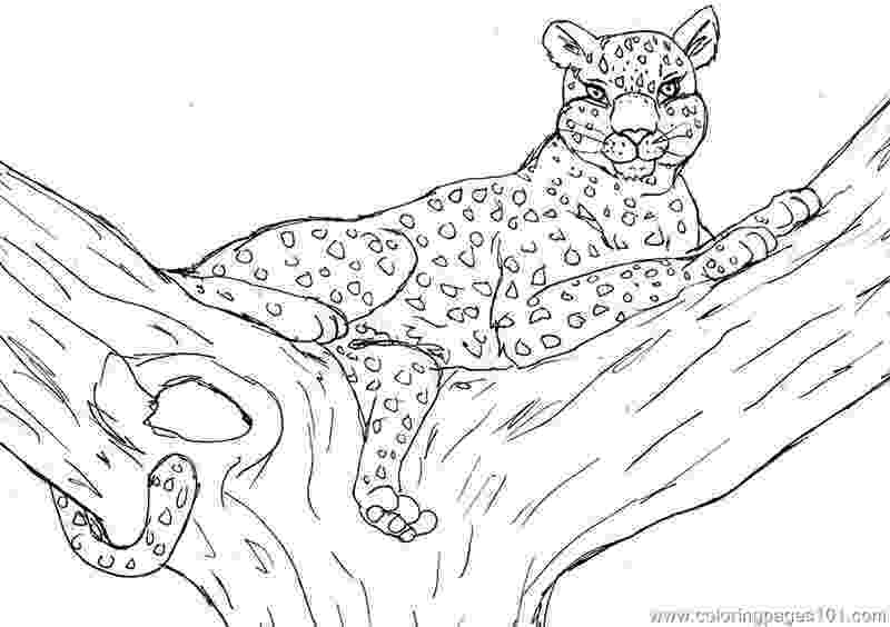 leopard pictures to color free printable cheetah coloring pages for kids to color pictures leopard