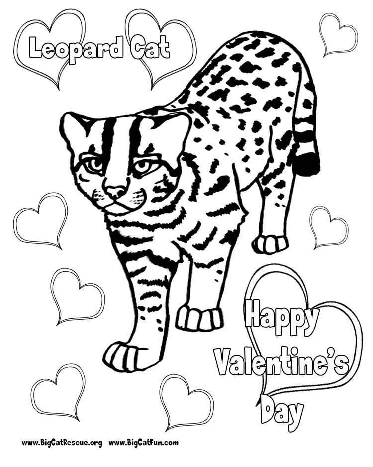 leopard pictures to color leopard coloring pages coloring home pictures color to leopard
