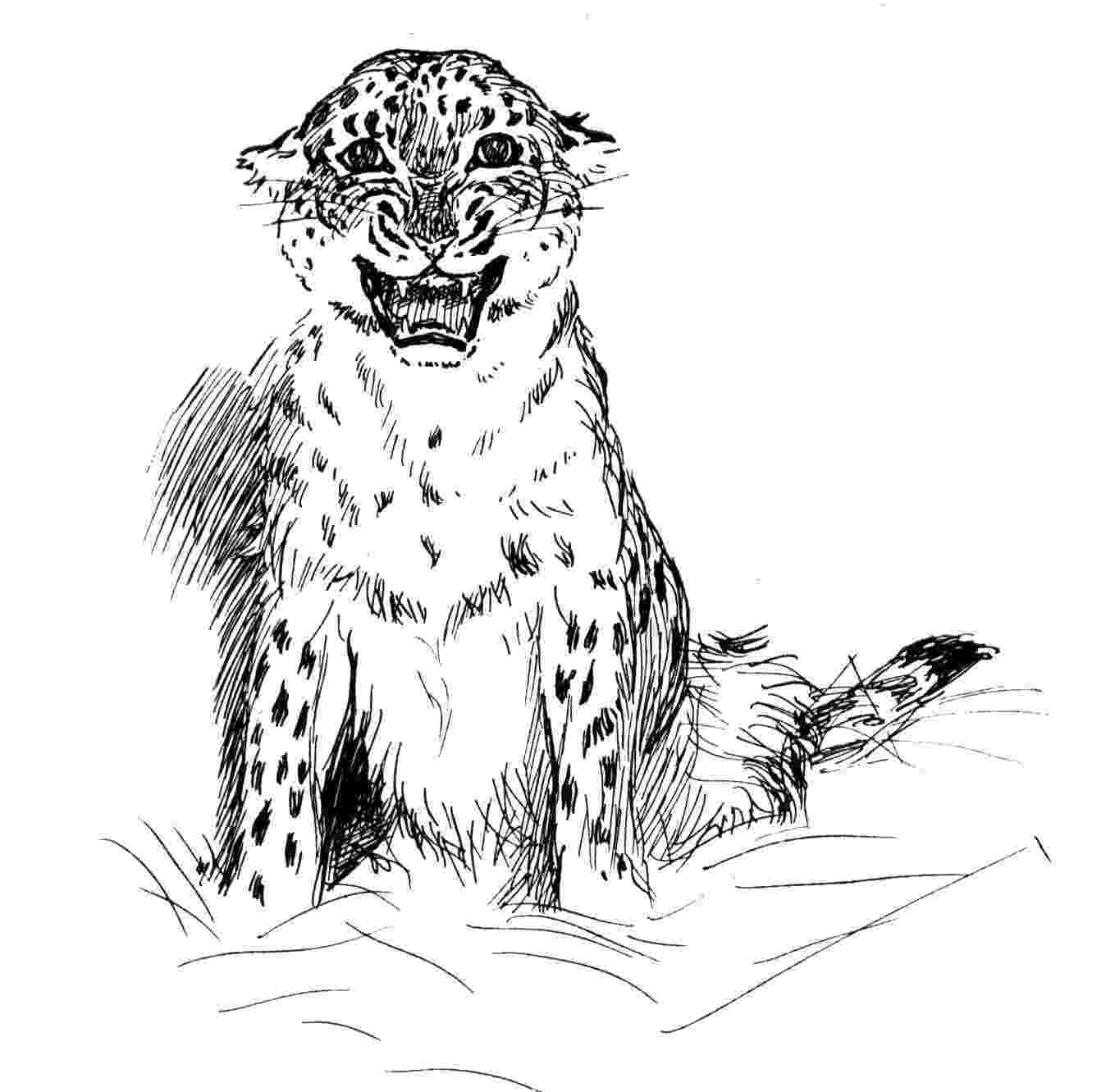 leopard pictures to color leopard coloring pages getcoloringpagescom color leopard to pictures