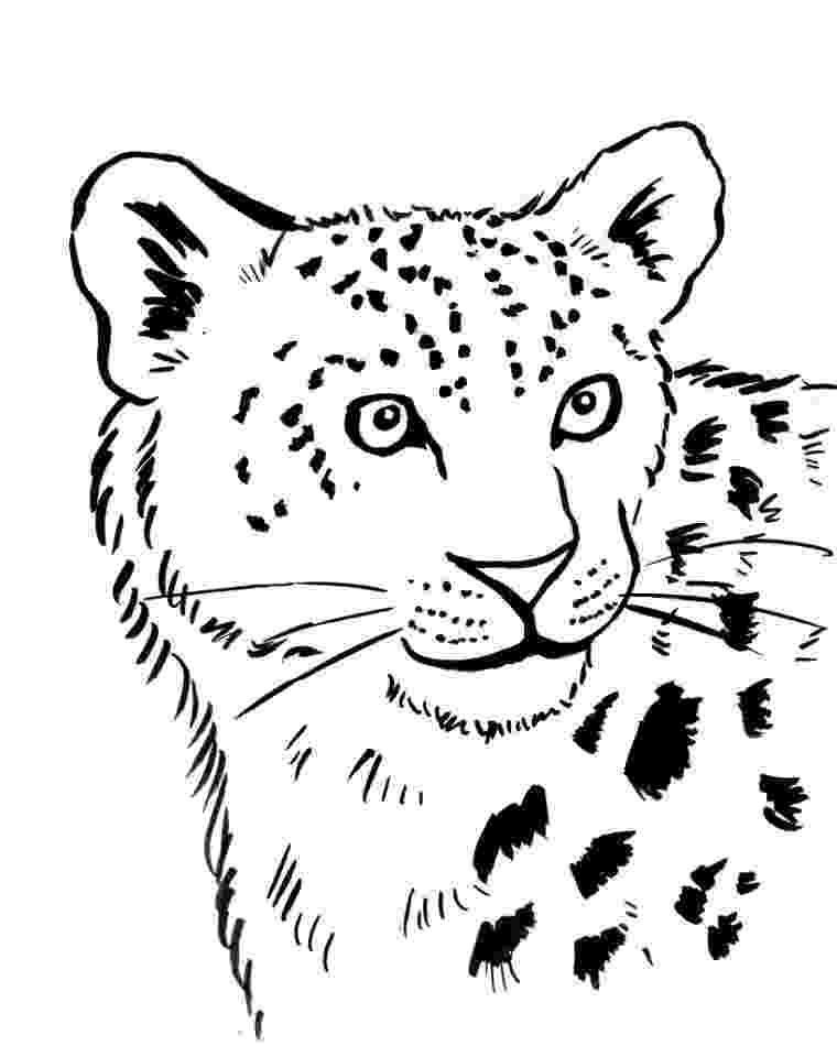 leopard pictures to color leopard coloring pages to download and print for free color leopard pictures to