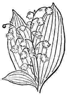 lily of the valley coloring page coloring page lily of the valley coloring pages the page lily coloring valley of