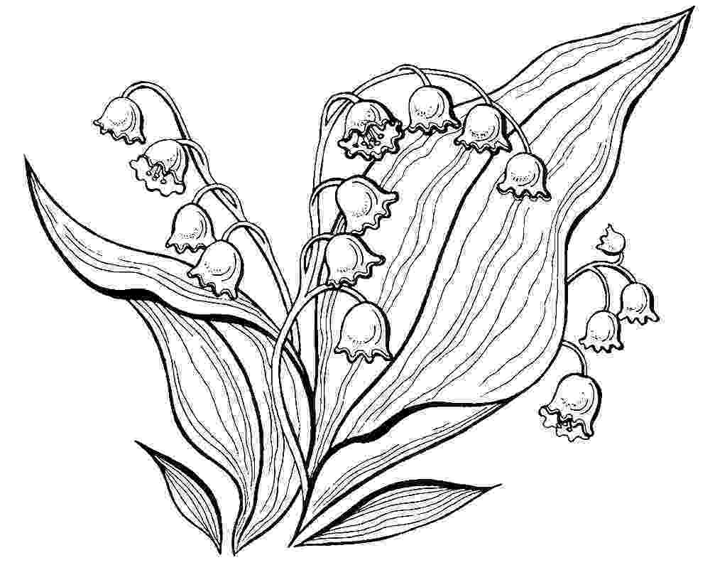 lily of the valley coloring page lily of the valley 1 coloring page free printable valley the of lily coloring page