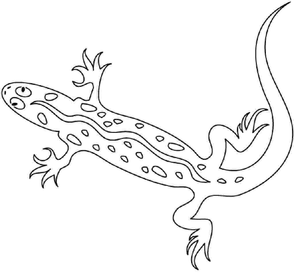 lizard pictures to color top 10 free printable lizard coloring pages online lizard color pictures to