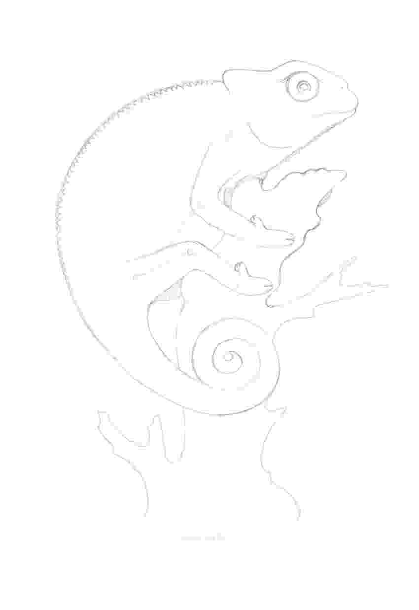 lizard sketch art by products dragon lizard faces sketch lizard