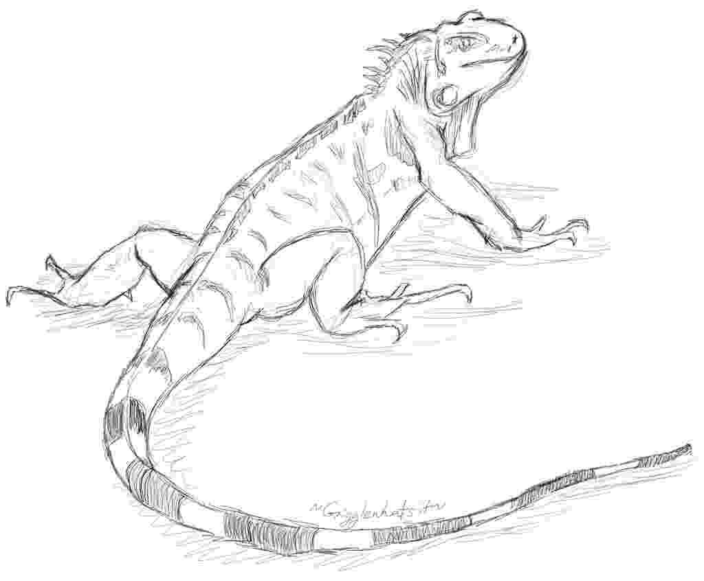 lizard sketch g l sketch lizard