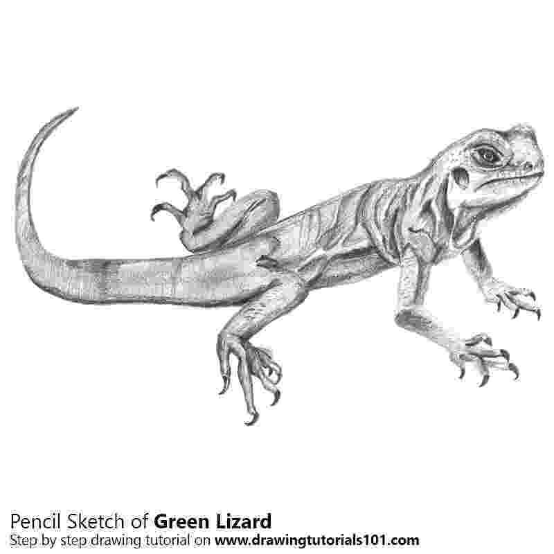 lizard sketch green lizard pencil drawing how to sketch green lizard lizard sketch