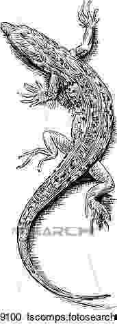 lizard sketch how to draw a lizard dragon step by step dragons draw a sketch lizard