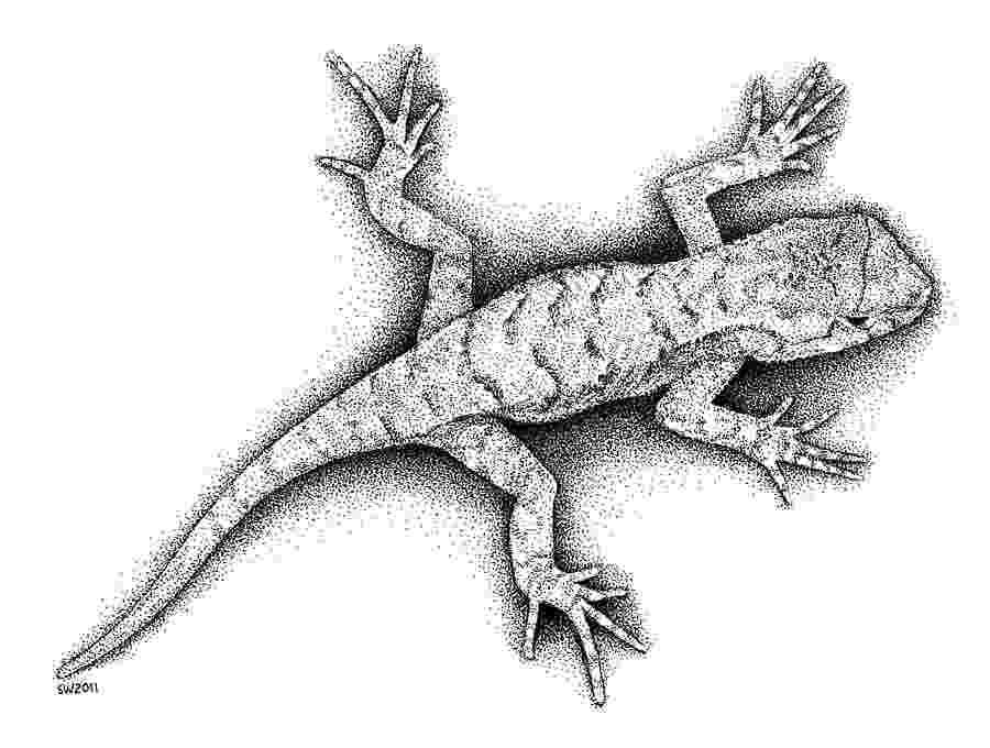 lizard sketch how to draw a lizard with ink liners sketch lizard