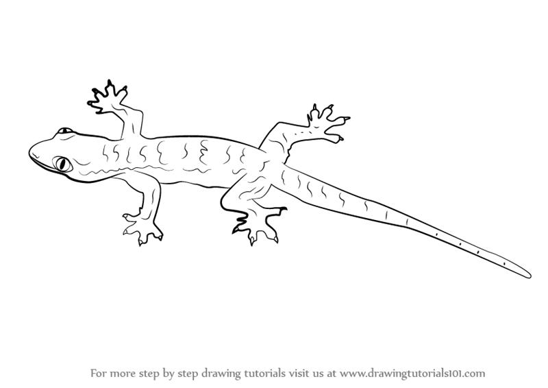 lizard sketch how to draw a realistic lizard step by step drawing sketch lizard