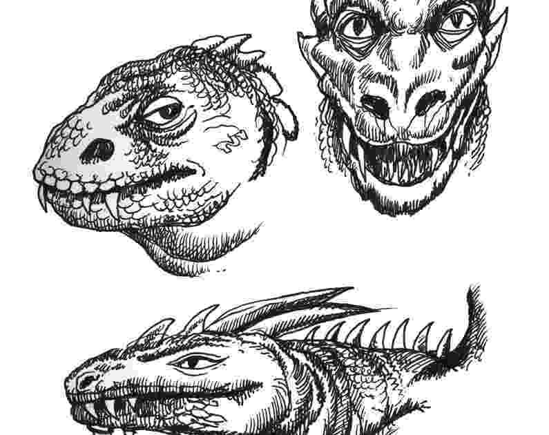 lizard sketch lizard how to draw a lizard youtube sketch lizard