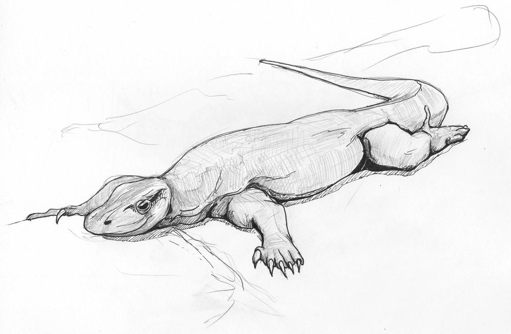 lizard sketch lizard sketch by amairin on deviantart sketch lizard