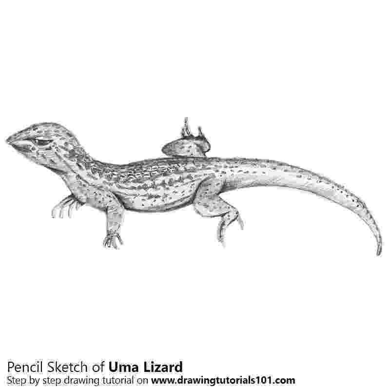 lizard sketch weird one39s deviantart gallery sketch lizard