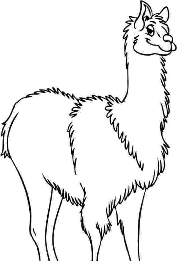 llama coloring page llama coloring pages kidsuki llama page coloring